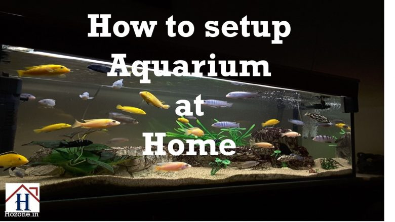 set up aquarium at home